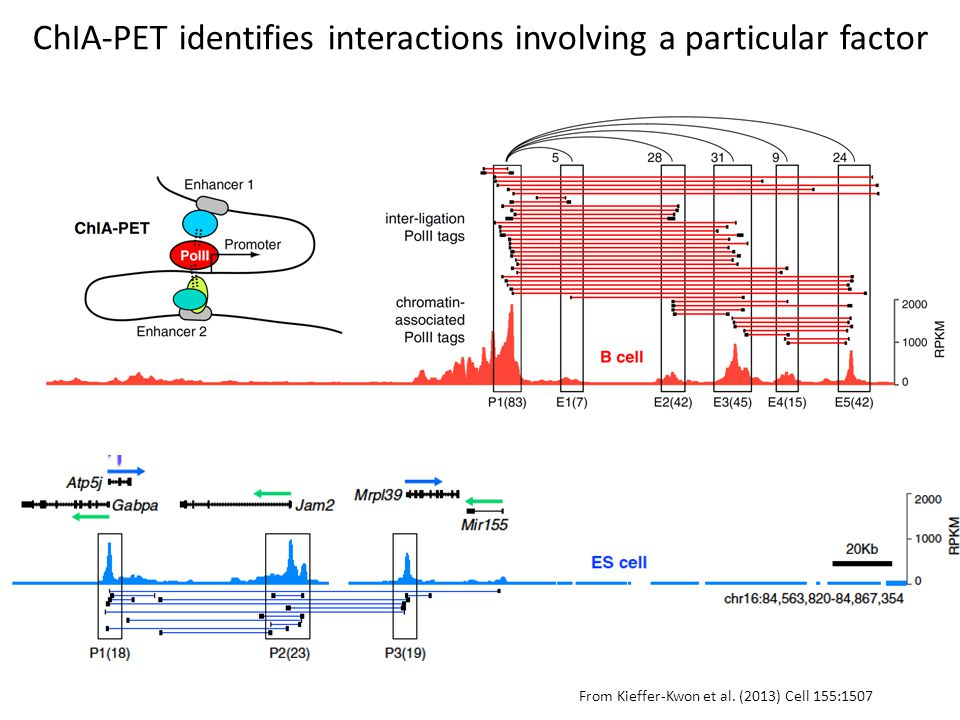From Kieffer-Kwon et al. (2013) Cell 155:1507 ChIA-PET identifies interactions involving a particular factor
