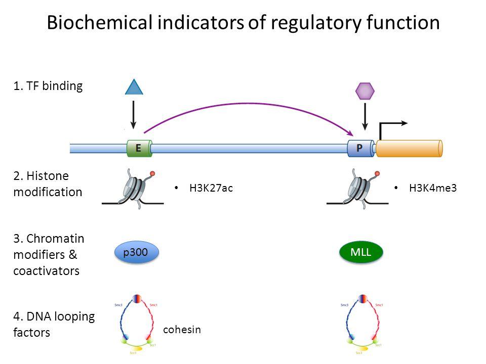1. TF binding Biochemical indicators of regulatory function 2. Histone modification H3K27ac H3K4me3 3. Chromatin modifiers & coactivators p300MLL 4. D