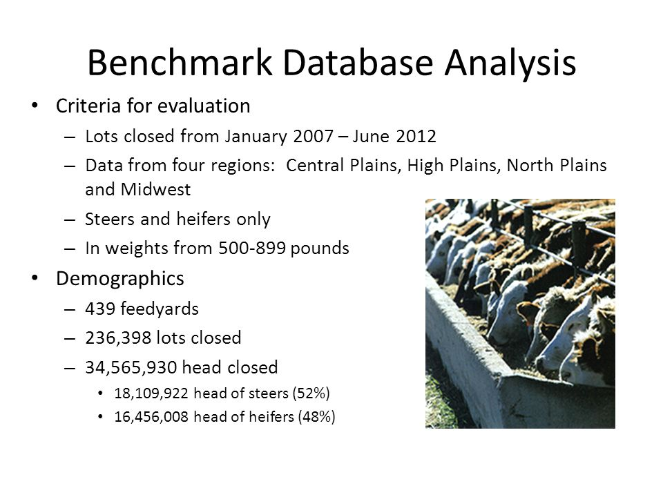 Benchmark Database Analysis Criteria for evaluation – Lots closed from January 2007 – June 2012 – Data from four regions: Central Plains, High Plains, North Plains and Midwest – Steers and heifers only – In weights from 500-899 pounds Demographics – 439 feedyards – 236,398 lots closed – 34,565,930 head closed 18,109,922 head of steers (52%) 16,456,008 head of heifers (48%)