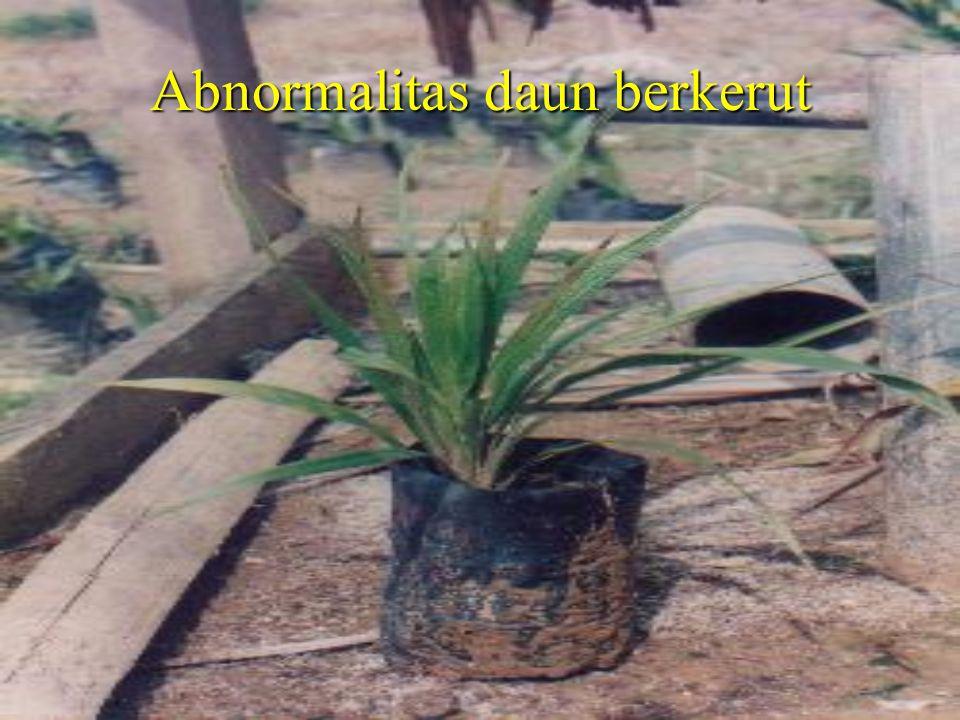 Abnormalitas daun berkerut