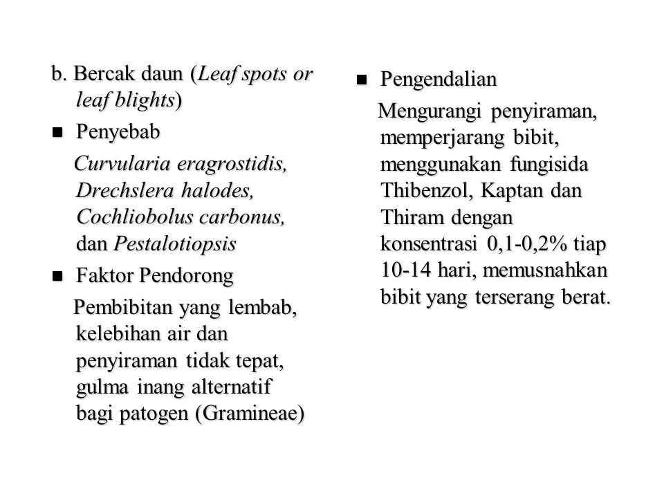 b. Bercak daun (Leaf spots or leaf blights) Penyebab Penyebab Curvularia eragrostidis, Drechslera halodes, Cochliobolus carbonus, dan Pestalotiopsis C