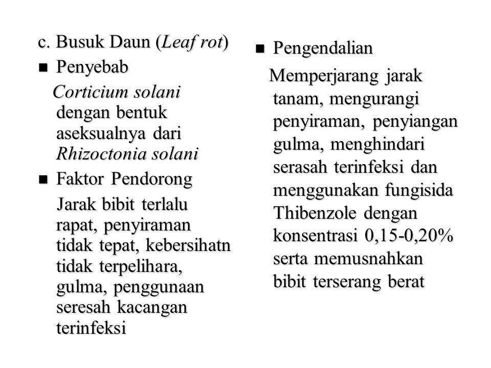 c. Busuk Daun (Leaf rot) Penyebab Penyebab Corticium solani dengan bentuk aseksualnya dari Rhizoctonia solani Corticium solani dengan bentuk aseksualn