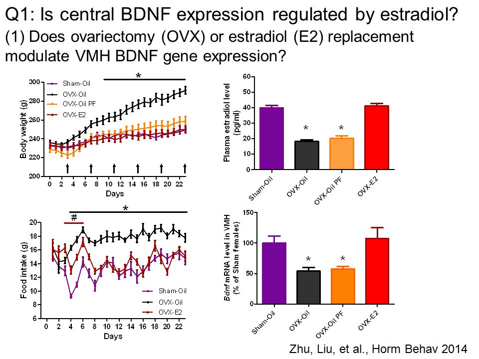 Zhu, Liu, et al., Horm Behav 2014 Q1: Is central BDNF expression regulated by estradiol.
