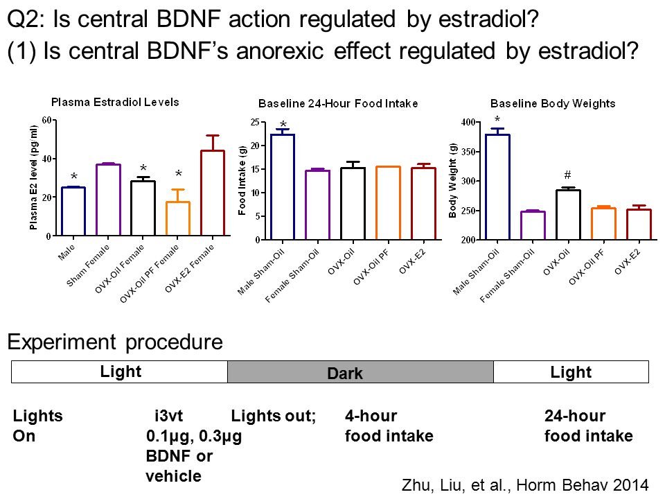 Experiment procedure Lights i3vt Lights out; 4-hour 24-hour On 0.1μg, 0.3μg food intakefood intake BDNF or vehicle Light Dark Light Zhu, Liu, et al., Horm Behav 2014 Q2: Is central BDNF action regulated by estradiol.