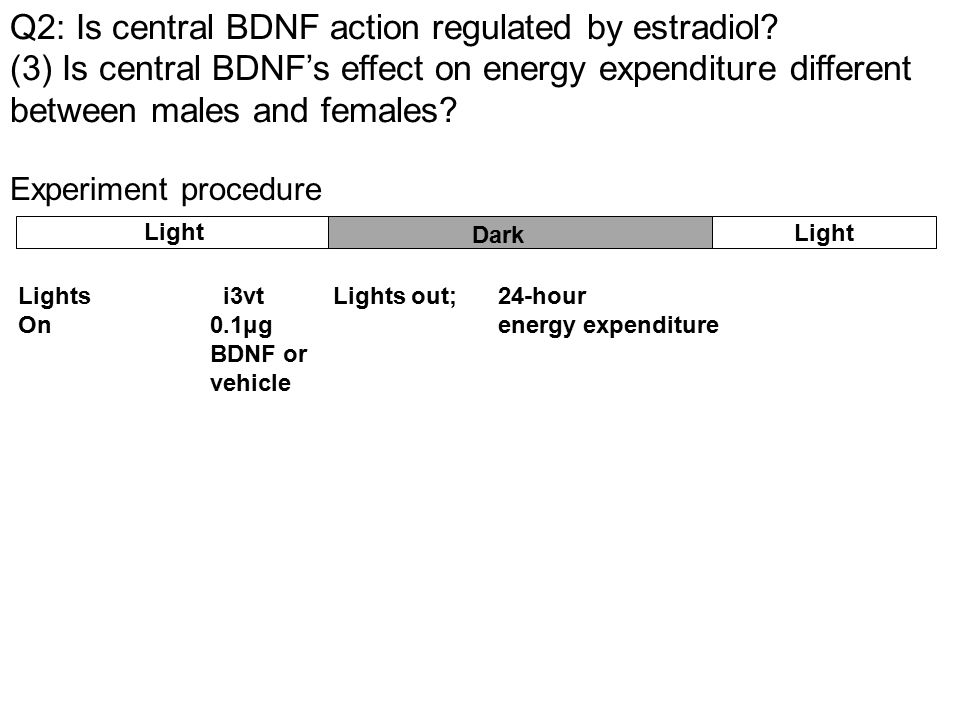 Experiment procedure Lights i3vt Lights out; 24-hour On 0.1μg energy expenditure BDNF or vehicle Light Dark Light Q2: Is central BDNF action regulated by estradiol.