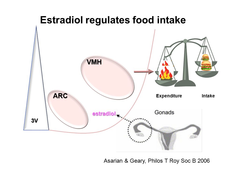 VMH 3V ARC Asarian & Geary, Philos T Roy Soc B 2006 Estradiol regulates food intake estradiol Expenditure Intake