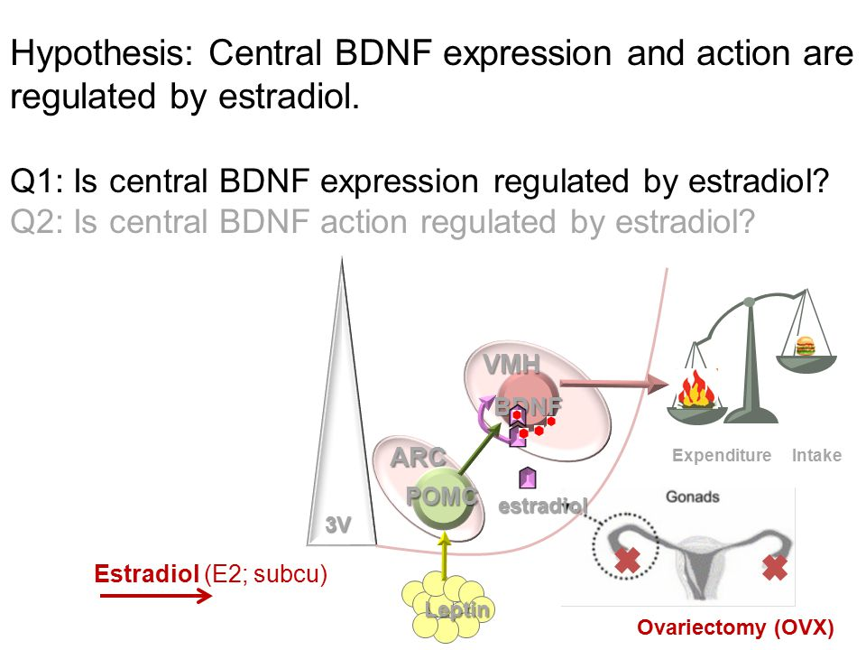 * * * Liu, Zhu, Shen, Shi.Unpublished. Q2: Is central BDNF action regulated by estradiol.