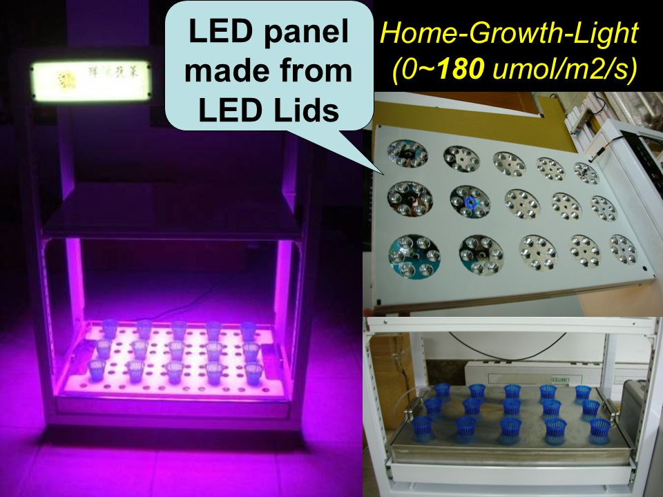 Symposium on Light in Horticulture, Tsukuba, Japan Home-Growth-Light (0~180 umol/m2/s) LED panel made from LED Lids