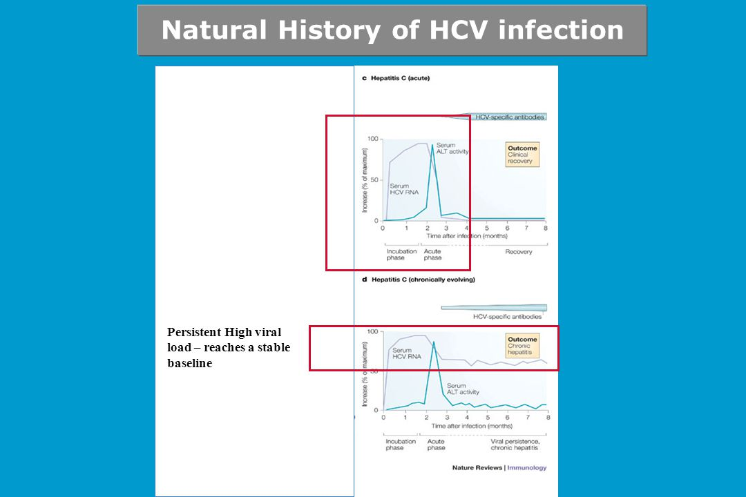 Persistent High viral load – reaches a stable baseline Natural History of HCV infection