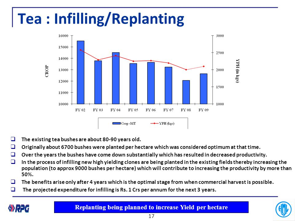 Tea : Infilling/Replanting  The existing tea bushes are about 80-90 years old.  Originally about 6700 bushes were planted per hectare which was cons