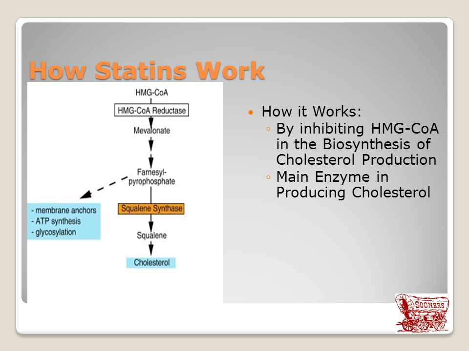 How it Works: ◦By inhibiting HMG-CoA in the Biosynthesis of Cholesterol Production ◦Main Enzyme in Producing Cholesterol How Statins Work