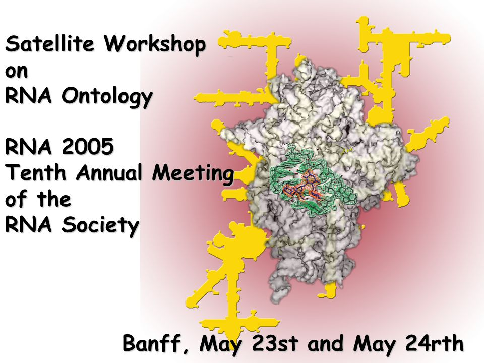 Satellite Workshop on RNA Ontology RNA 2005 Tenth Annual Meeting of the RNA Society Banff, May 23st and May 24rth