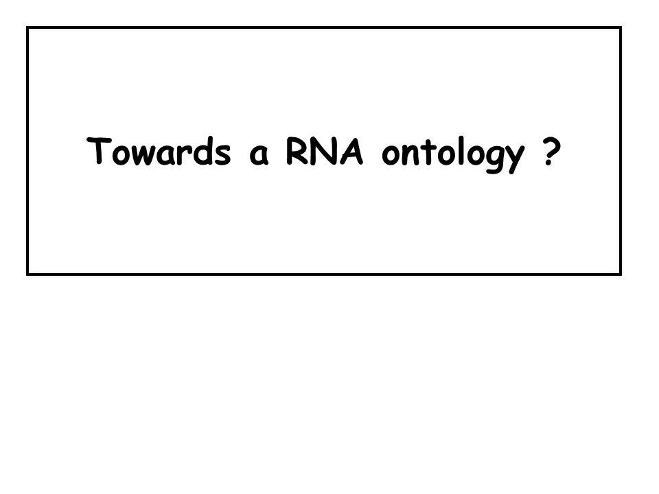 Towards a RNA ontology ?