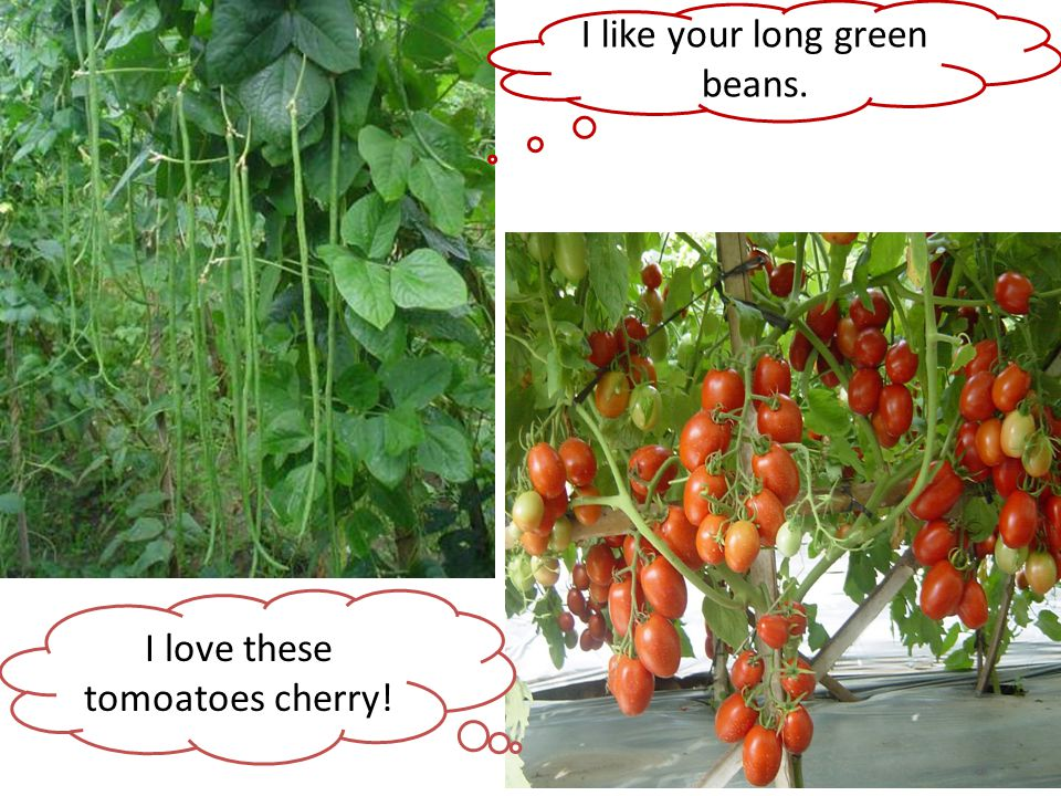 I like your long green beans. I love these tomoatoes cherry!