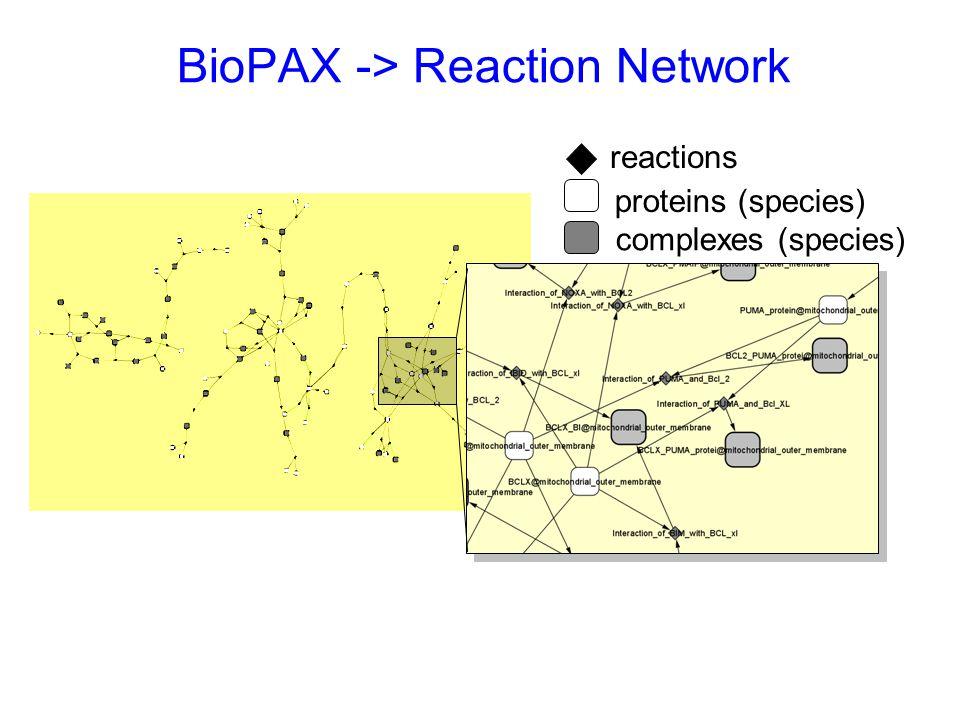 BioPAX -> Reaction Network proteins (species) complexes (species) reactions