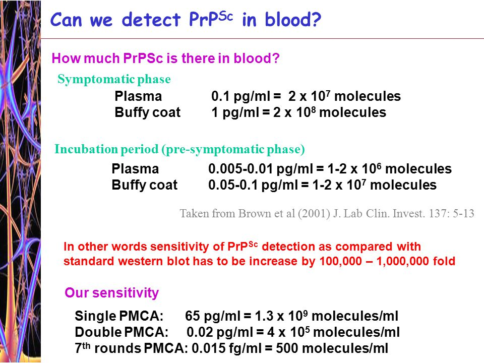 Symptomatic phase Plasma0.1 pg/ml = 2 x 10 7 molecules Buffy coat1 pg/ml = 2 x 10 8 molecules Incubation period (pre-symptomatic phase) Plasma0.005-0.01 pg/ml = 1-2 x 10 6 molecules Buffy coat0.05-0.1 pg/ml = 1-2 x 10 7 molecules Can we detect PrP Sc in blood.