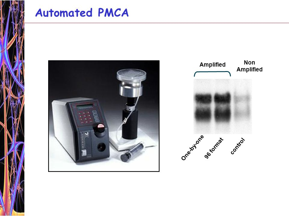 Ultrasensitive detection of PrP Sc by serial PMCA 1.0x10 3 Dilution Non amplified Amplification factor ~ 6600 fold 3.0x10 3 9.0x10 3 2.7x10 4 8.1x10 4 2.4x10 5 7.3x10 5 2.2x10 6 6.6x10 6 NBH -PK 2.0x10 7 6.0x10 7 144 PMCA cycles 1:10 1 st PMCA (96 cycles) 2 nd PMCA (118 cycles) 2.5x10 4 Dilution 1.3x10 5 6.3x10 5 3.1x10 6 Dilution 3.1x10 6 1.6x10 7 7.8x10 7 3.9x10 8 2.0x10 9 1.0x10 10 5.0x10 10 1.0x10 3 5.0x10 3 NBH -PK NBH -PK 2.5x10 11 1.2x10 12 Non amplified Amplification factor ~10 million folds Castilla, Saa and Soto (2005) Nature Medicine 11:982-985