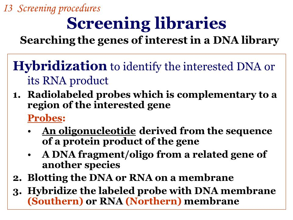 Screening libraries Hybridization to identify the interested DNA or its RNA product 1.Radiolabeled probes which is complementary to a region of the interested gene Probes: An oligonucleotide derived from the sequence of a protein product of the gene A DNA fragment/oligo from a related gene of another species 2.Blotting the DNA or RNA on a membrane 3.Hybridize the labeled probe with DNA membrane (Southern) or RNA (Northern) membrane Searching the genes of interest in a DNA library I3 Screening procedures
