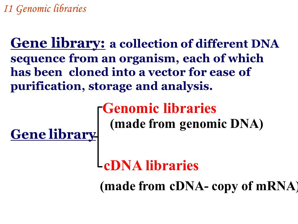 Gene library: a collection of different DNA sequence from an organism, each of which has been cloned into a vector for ease of purification, storage and analysis.