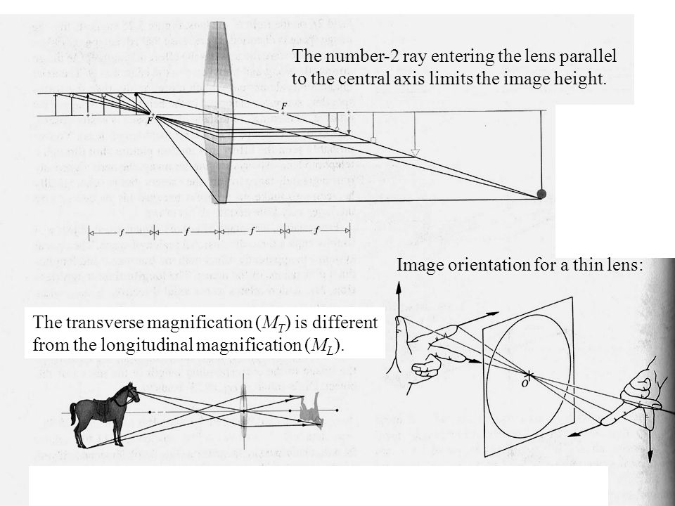 The number-2 ray entering the lens parallel to the central axis limits the image height.