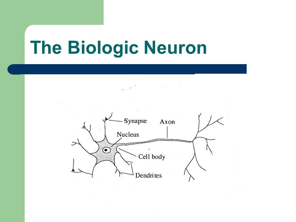 The Biologic Neuron
