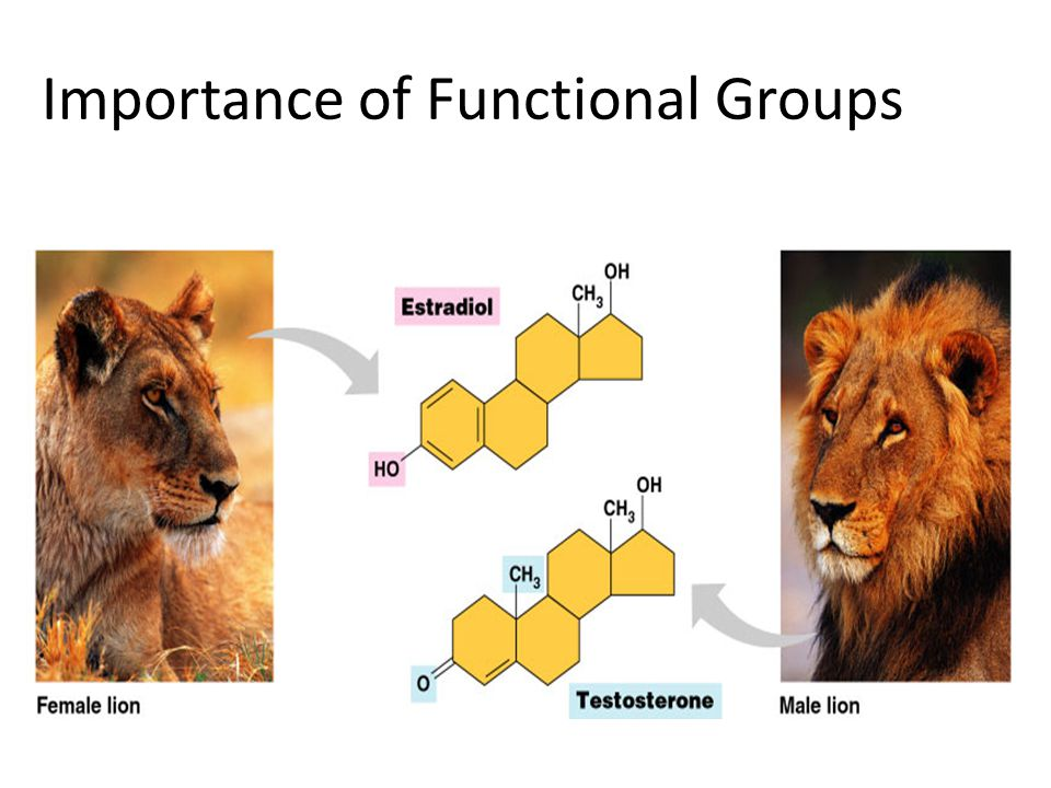 Importance of Functional Groups