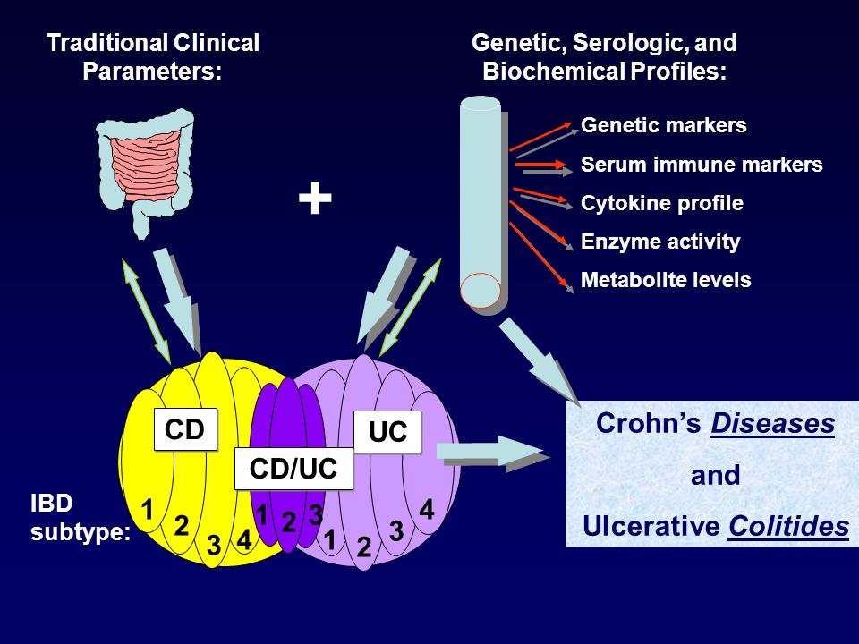 + IBD subtype: UC 1 2 3 41 2 3 4 1 2 3 CD/UC Crohn's Diseases and Ulcerative Colitides Traditional Clinical Parameters: CD Genetic markers Serum immun