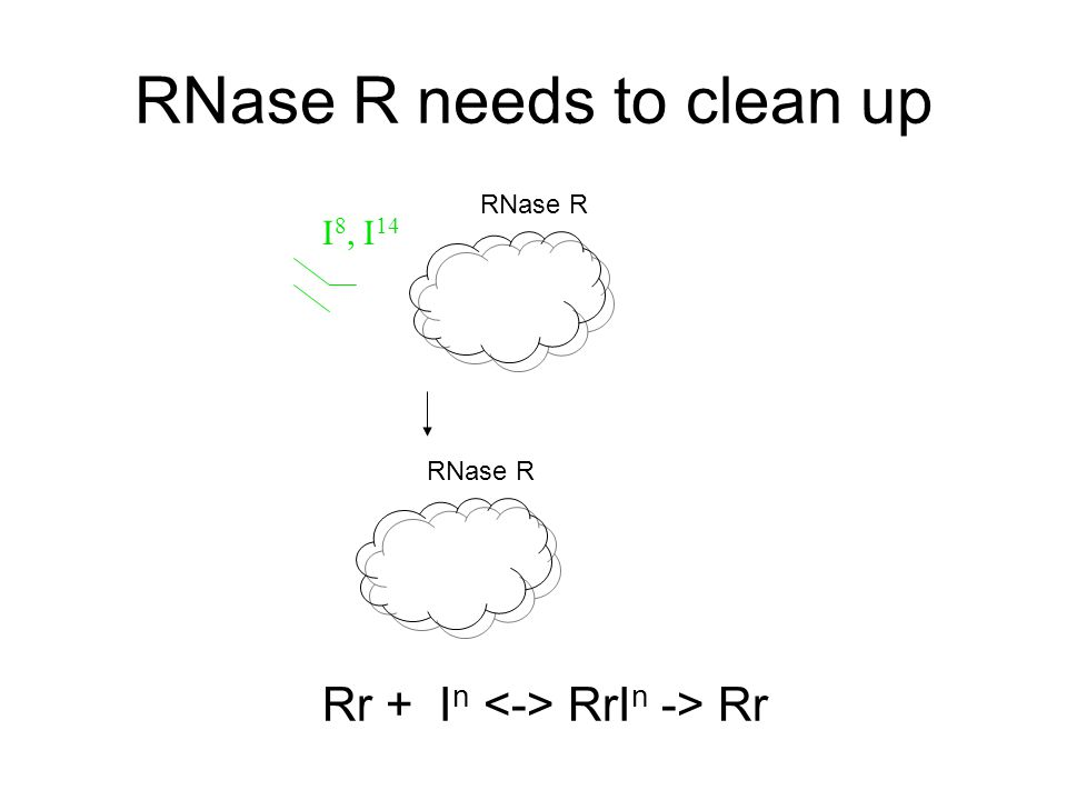RNase R needs to clean up I 8, I 14 RNase R Rr + I n RrI n -> Rr