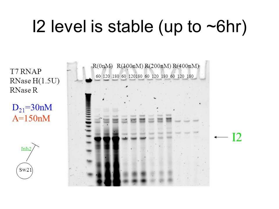 I2 level is stable (up to ~6hr) R(0nM)R(100nM)R(200nM)R(400nM) D 21 =30nM A=150nM T7 RNAP RNase H(1.5U) RNase R 60120 60180 12060 180 Sw21 Inh2 I2