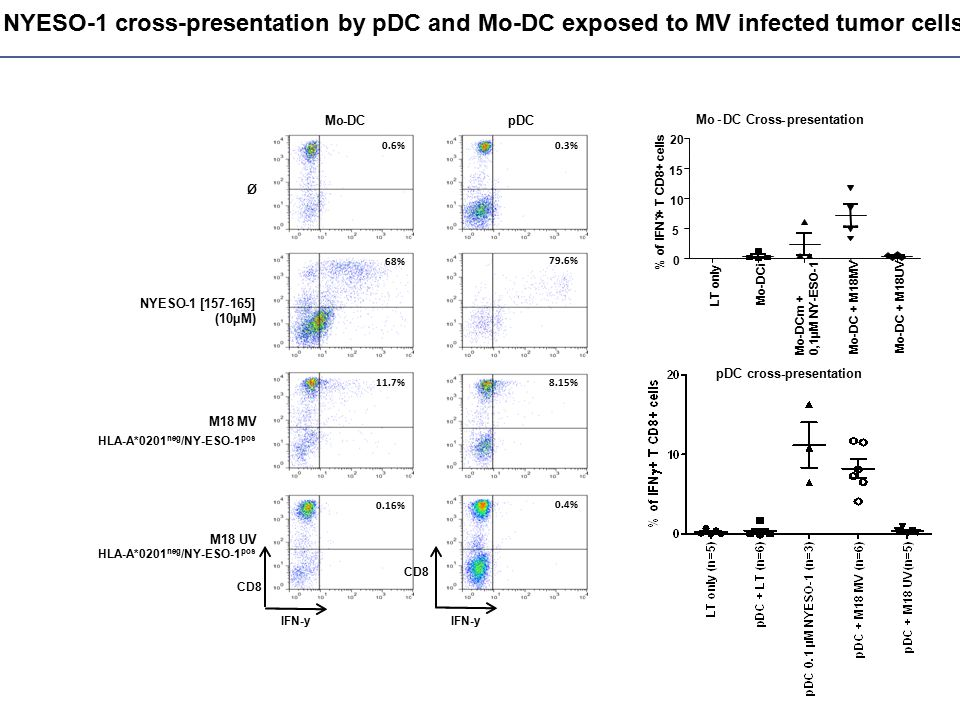 NYESO-1 cross-presentation by pDC and Mo-DC exposed to MV infected tumor cells HLA-A*0201 neg /NY-ESO-1 pos Mo-DCpDC Ø NYESO-1 [157-165] (10µM) M18MV M18 UV IFN-y -y 0.6% 11.7% 68% 0.16% 0.3% 8.15% 79.6% 0.4% CD8 LT only Mo-DCi Mo-DCm + 0,1µM NY-ESO-1 Mo-DC + M18MV Mo-DC + M18UV 0 5 10 15 20 % of IFN  + T CD8+ cells Mo - DC Cross-presentation pDC cross-presentation