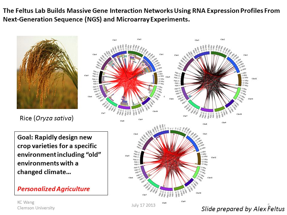 The Feltus Lab Builds Massive Gene Interaction Networks Using RNA Expression Profiles From Next-Generation Sequence (NGS) and Microarray Experiments.