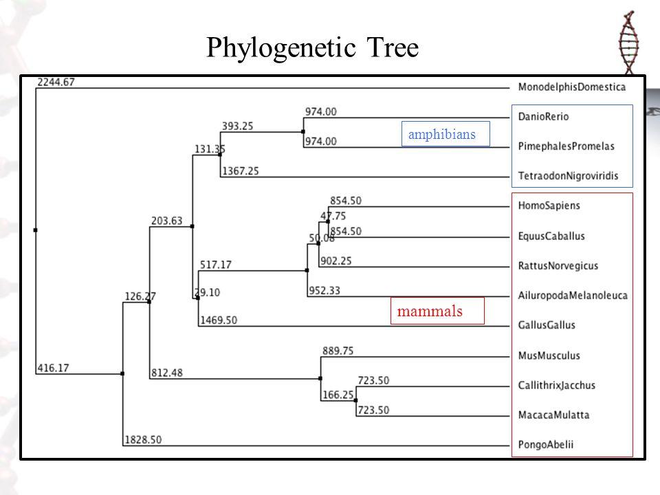 Phylogenetic Tree amphibians mammals
