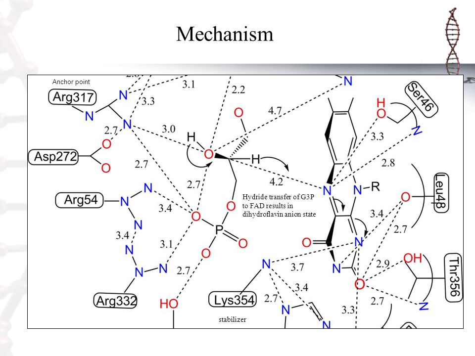Mechanism Anchor point Hydride transfer of G3P to FAD results in dihydroflavin anion state stabilizer