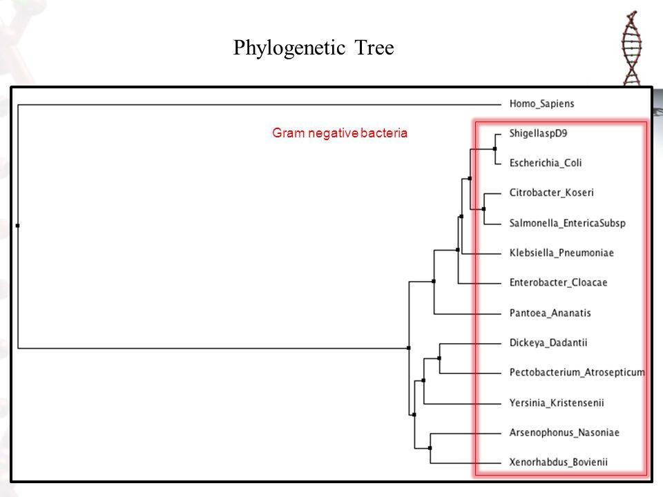 Phylogenetic Tree Gram negative bacteria