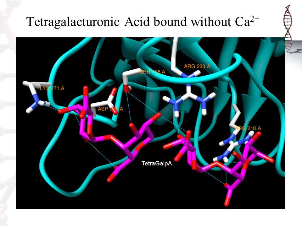 Tetragalacturonic Acid bound without Ca 2+ TetraGalpA