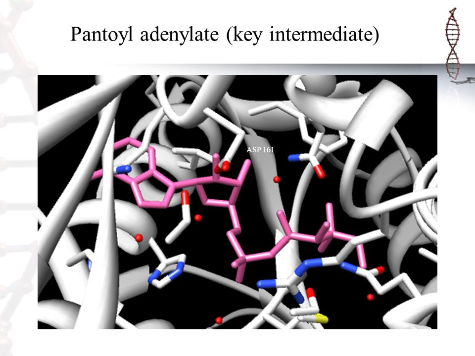 Pantoyl adenylate (key intermediate) ASP 161