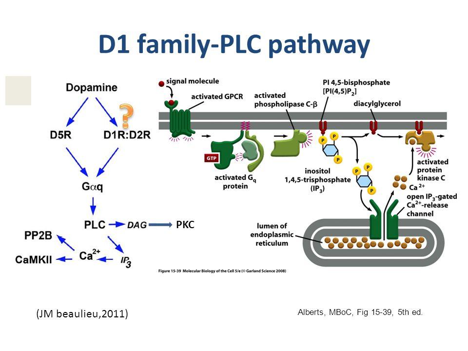 D1 family-PLC pathway PKC Alberts, MBoC, Fig 15-39, 5th ed. (JM beaulieu,2011)