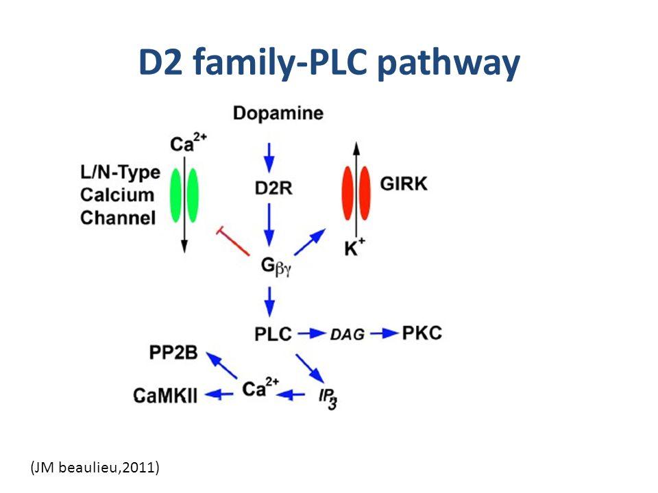 D2 family-PLC pathway (JM beaulieu,2011)