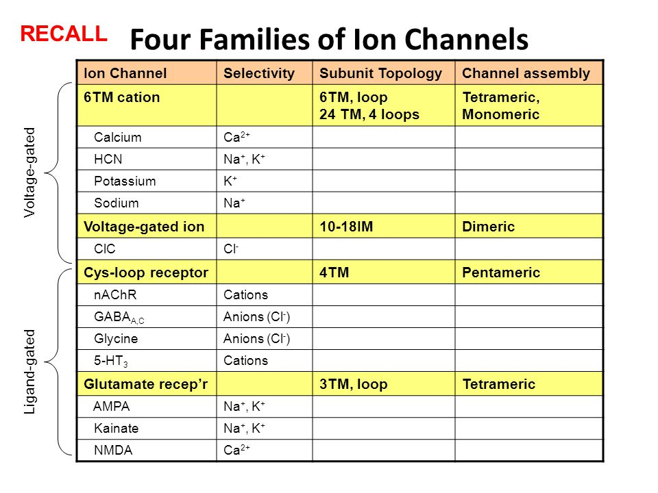 Four Families of Ion Channels Ion ChannelSelectivitySubunit TopologyChannel assembly 6TM cation6TM, loop 24 TM, 4 loops Tetrameric, Monomeric CalciumCa 2+ HCNNa +, K + PotassiumK+K+ SodiumNa + Voltage-gated ion10-18IMDimeric ClCCl - Cys-loop receptor4TMPentameric nAChRCations GABA A,C Anions (Cl - ) GlycineAnions (Cl - ) 5-HT 3 Cations Glutamate recep'r3TM, loopTetrameric AMPANa +, K + KainateNa +, K + NMDACa 2+ Ligand-gated Voltage-gated RECALL
