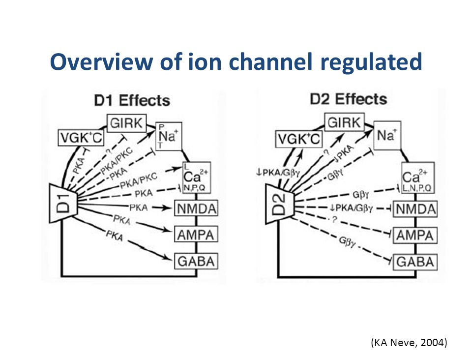 Overview of ion channel regulated (KA Neve, 2004)