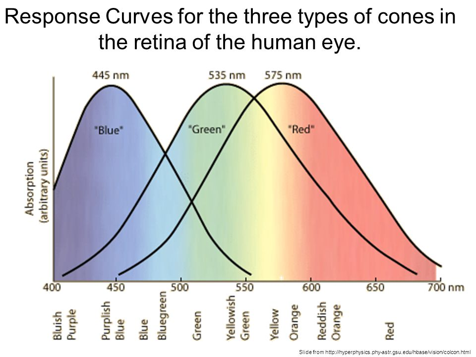 Slide from http://hyperphysics.phy-astr.gsu.edu/hbase/vision/colcon.html Response Curves for the three types of cones in the retina of the human eye.