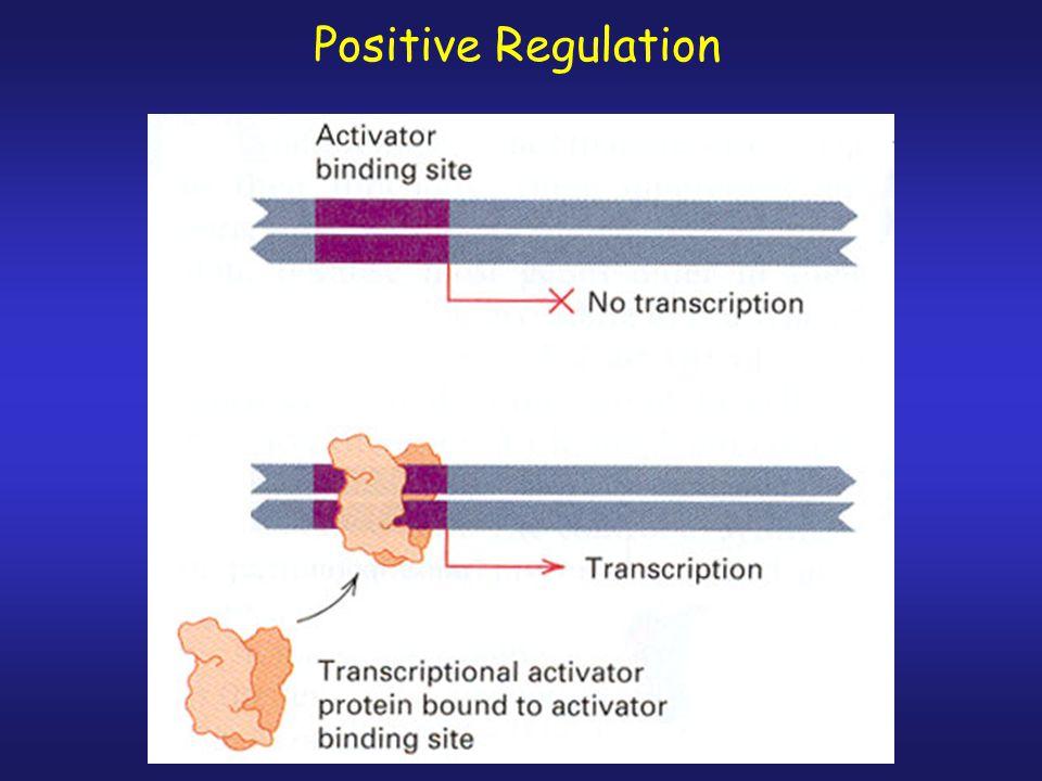 Negative Regulation Repressible