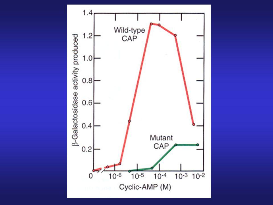 1.Addition of cAMP overcomes catabolite repression.