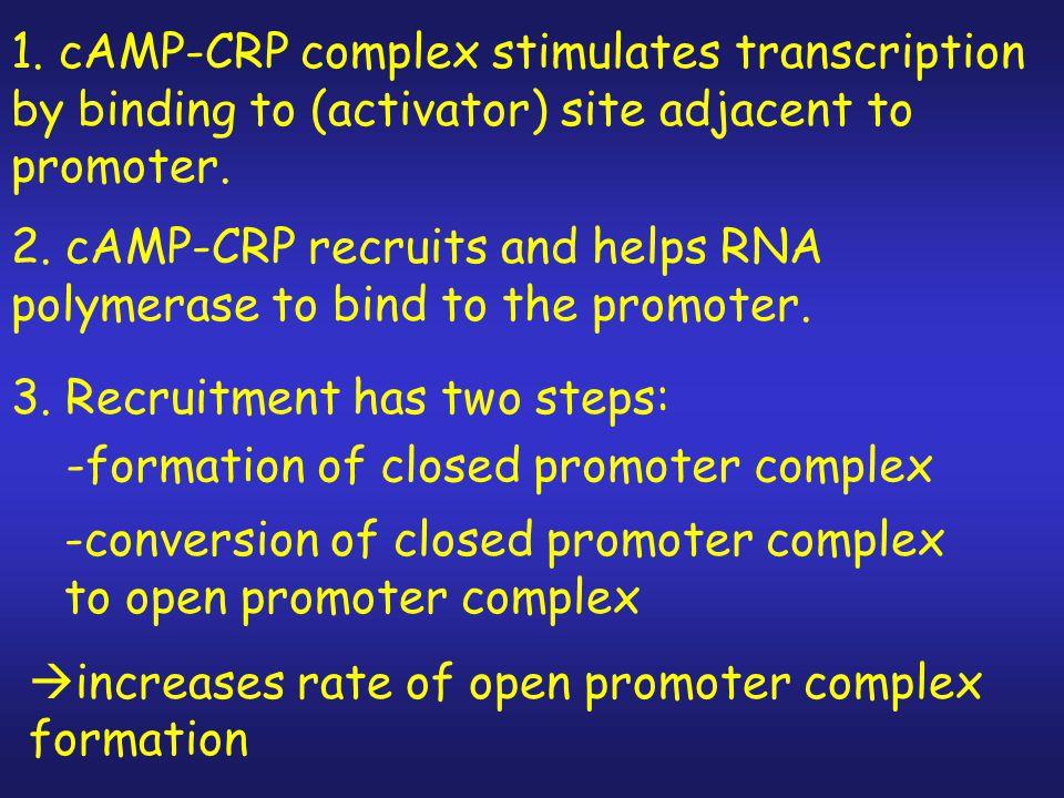 The Molecular Mechanism of c-AMP-CRP Action