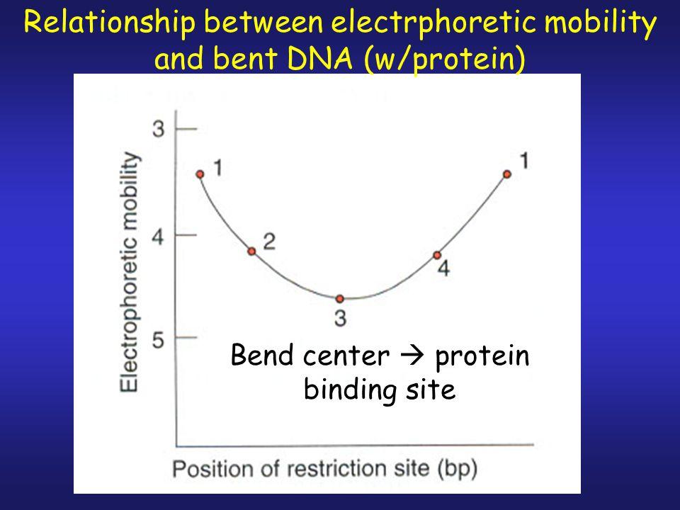 2. Bind protein