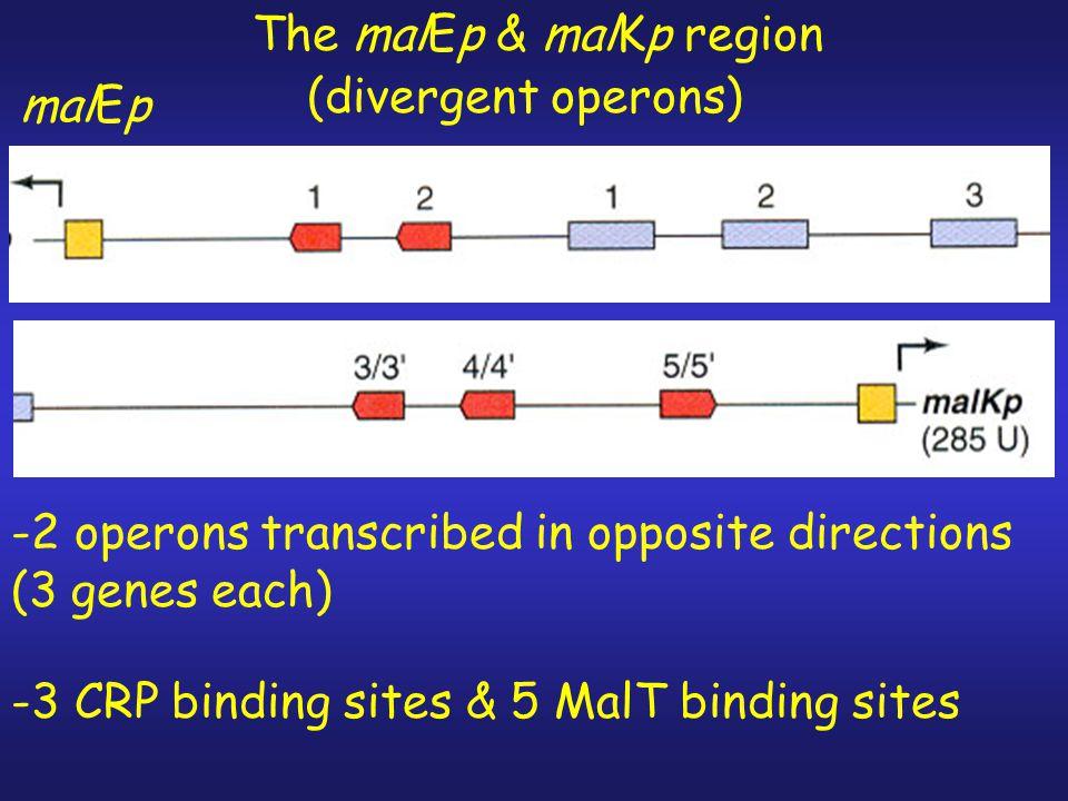1.mal regulon regulated by CRP 2.