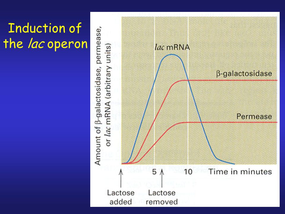 1.Diauxic growth is dependent upon the carbon (sugar) source used.