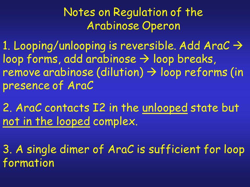 Addition of Arabinose Breaks Loop between araO2 and araI