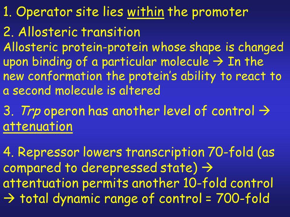 Repression: tryptophan is a co-repressor  binds (inactive) apo-repressor converting it to active repressor