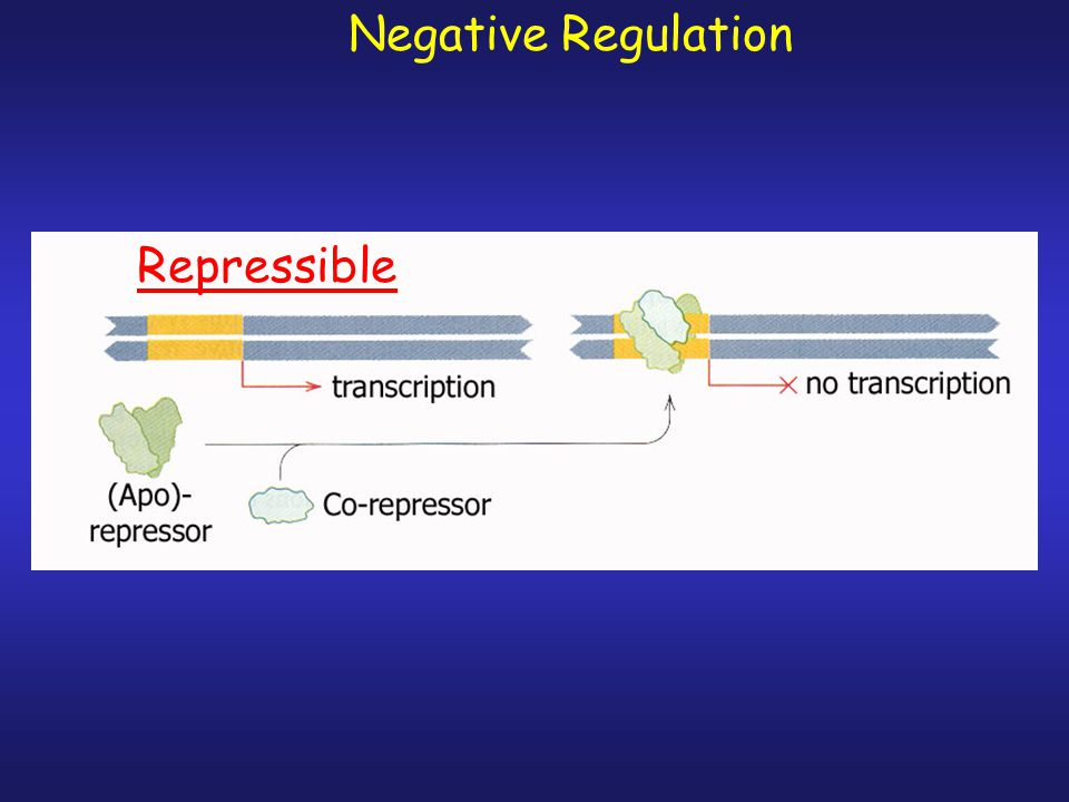 Negative Regulation of transcription Inducible